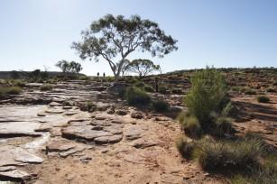 australia018
