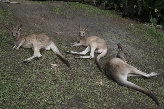 australia042