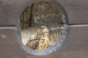 Urbino2011_44